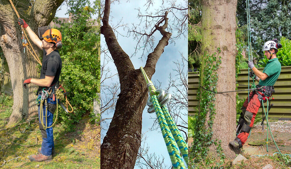 Methods of setting the ropes for climbing tree safely.
